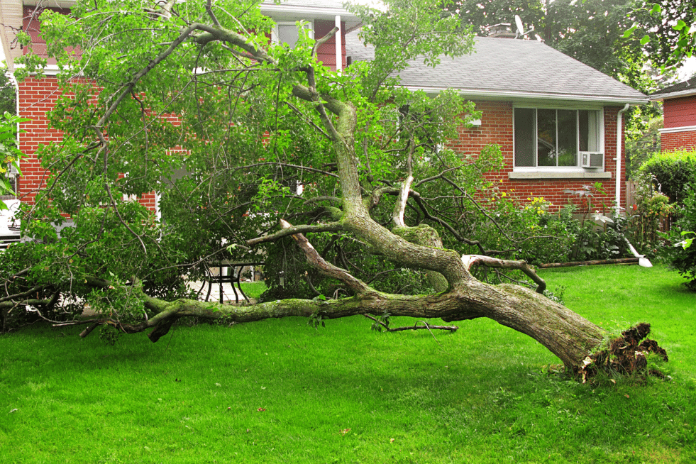 Tree Service Columbia SC - Emergency Tree Service