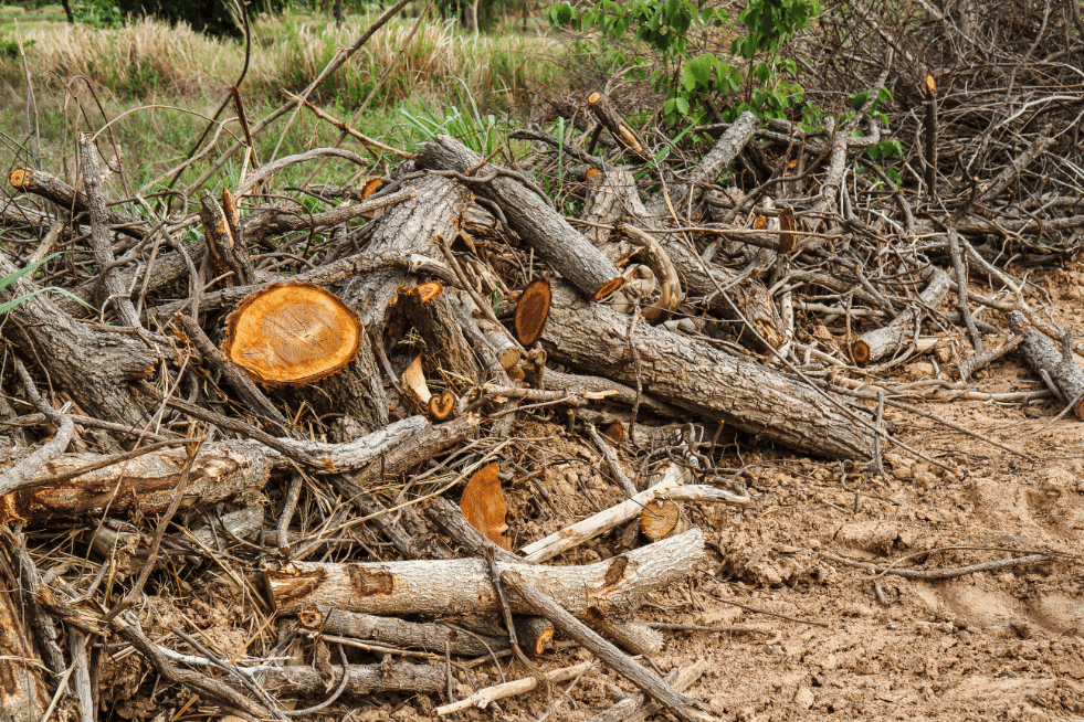 Tree Service Columbia SC - Land clearing