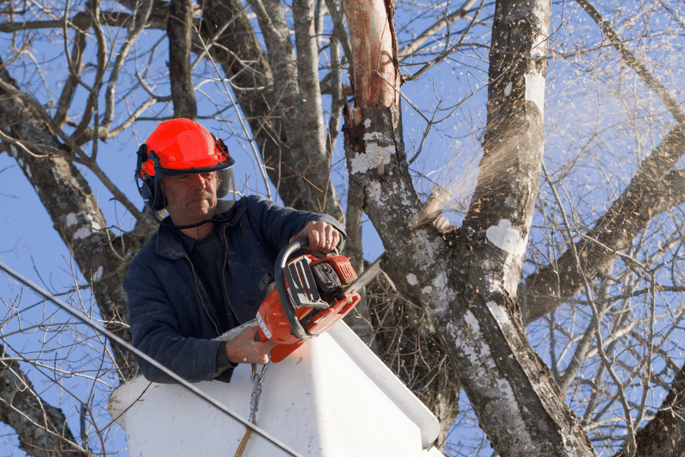 Tree Service Columbia SC - One of our tree trimmers