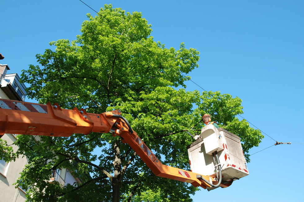 Tree Service Columbia SC - Tree Trimmer up high in the trees